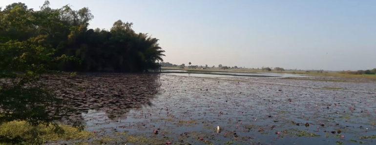 Gulawat Lotus Valley, Indore